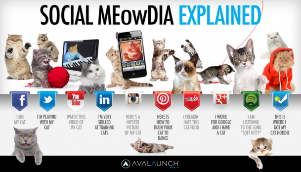 http://avalaunchmedia.com/infographics/social-meowdia-explained